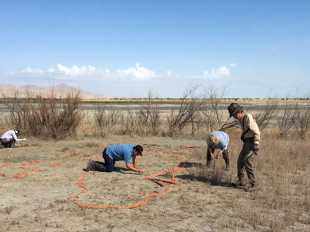 Tackling Tamarisk at Gillmor Sanctuary