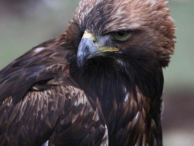 WIND POWER: FIRST PROSECUTION FOR BIRD DEATHS