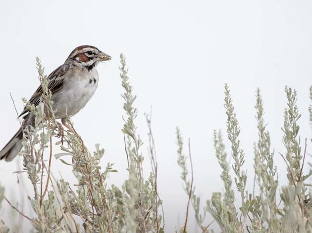 Falxa Ranch Designated an Important Bird Area