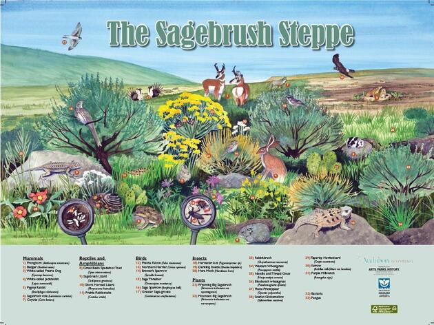 Sagebrush Poster