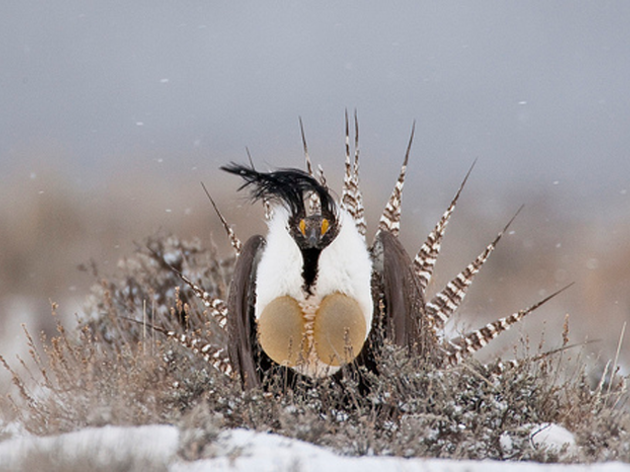 Audubon Rockies Commends Efforts of U.S. Fish and Wildlife Service