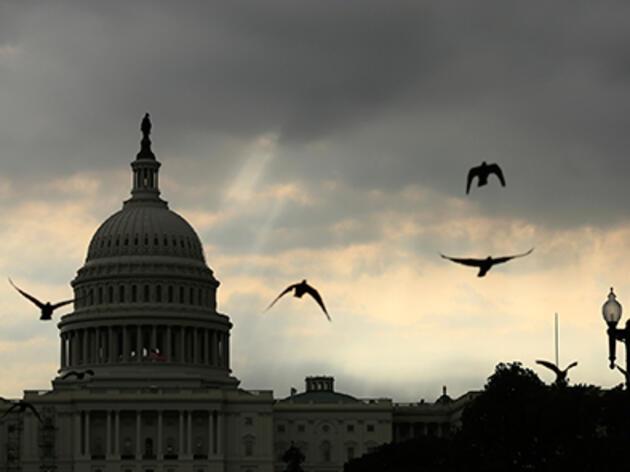 The Bipartisan Partnership Behind the Bird-Safe Building Act