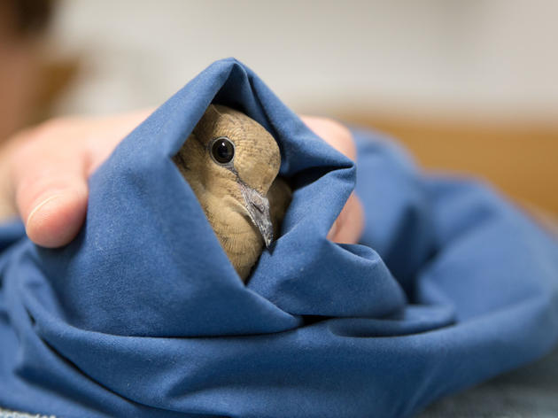 The Dos and Don'ts of Helping Baby and Injured Birds