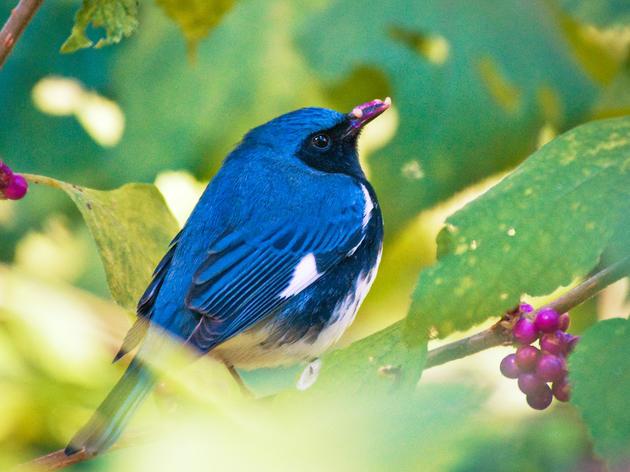 Bird-Friendly Plants FAQ