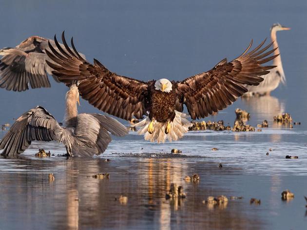 2016 Audubon Rockies Birdathon