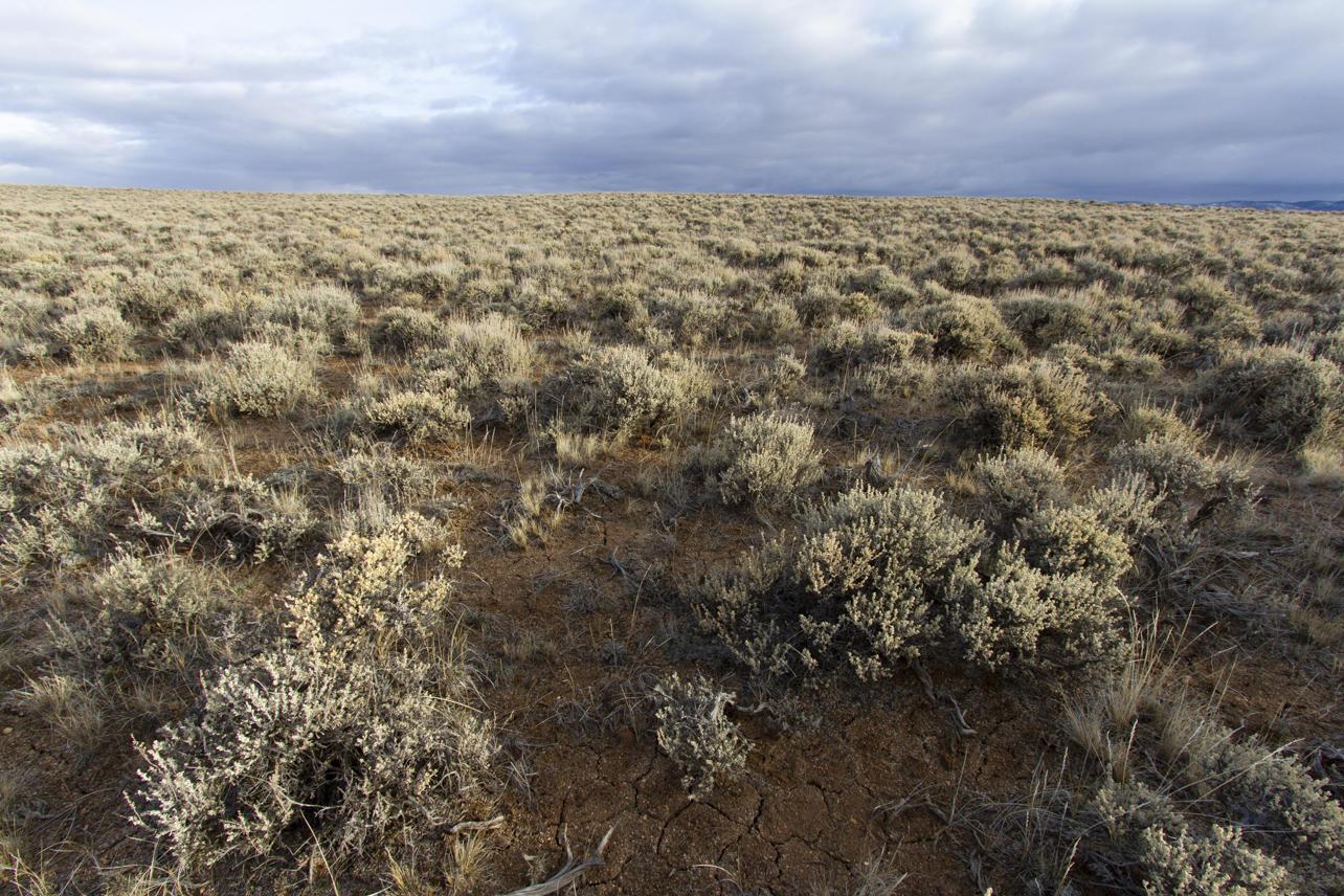 Core sage-grouse habitat in Wyoming.