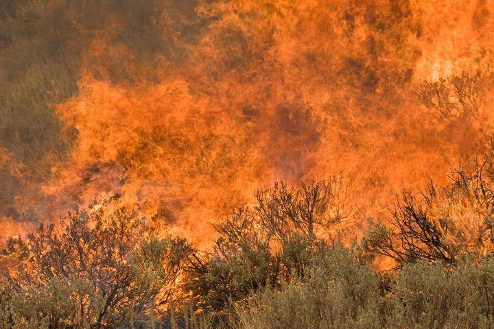 Sagebrush wildfire