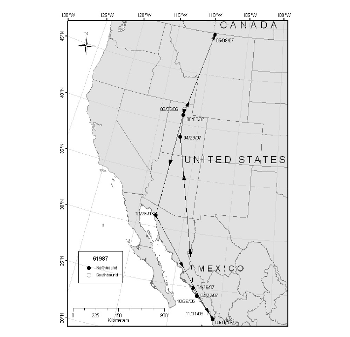 Migration route and location points of Marbled Godwit 61987 captured at Bear River Migratory Bird Refuge, UT, 2006.