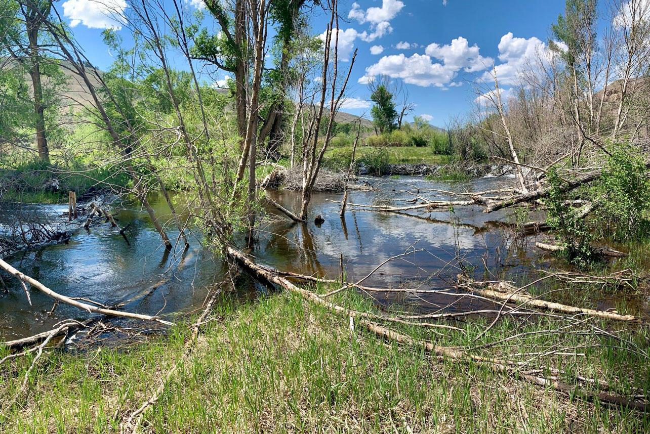 Stream runs through a wooded wetland.
