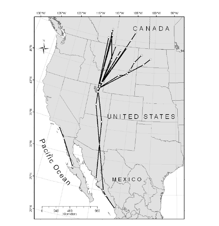 Northbound migration routes and location points of Marbled Godwits PTT-tagged at Bear River Migratory Bird Refuge, Utah, 2006-2010.