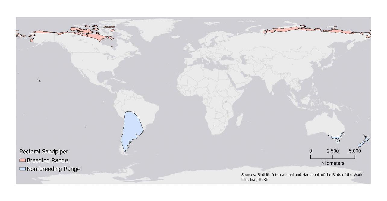 Pectoral Sandpiper Distribution Map.
