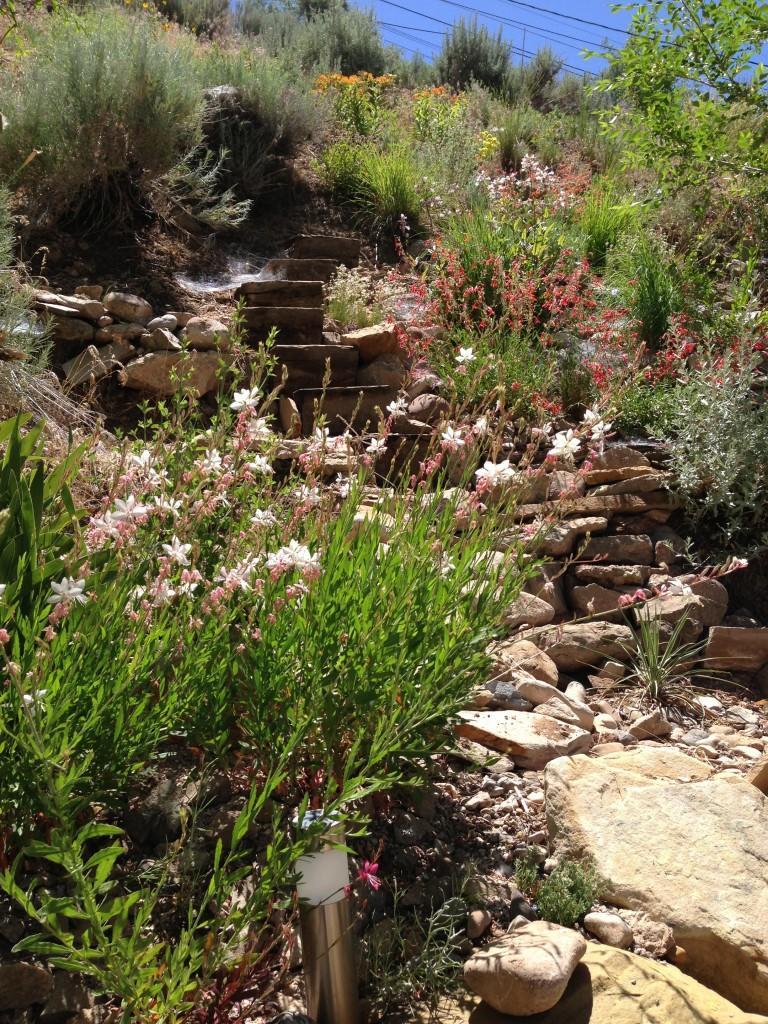 Habitat Hero Awards: Residential Gardens, Part I | Audubon Rockies