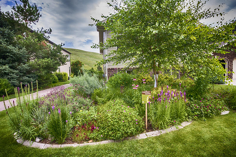 The Front Flower Bed Prairie For Pollinators A Tree Perch And To Shade Cool House