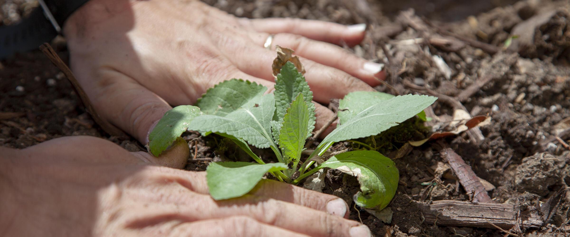 Habitat Hero planting