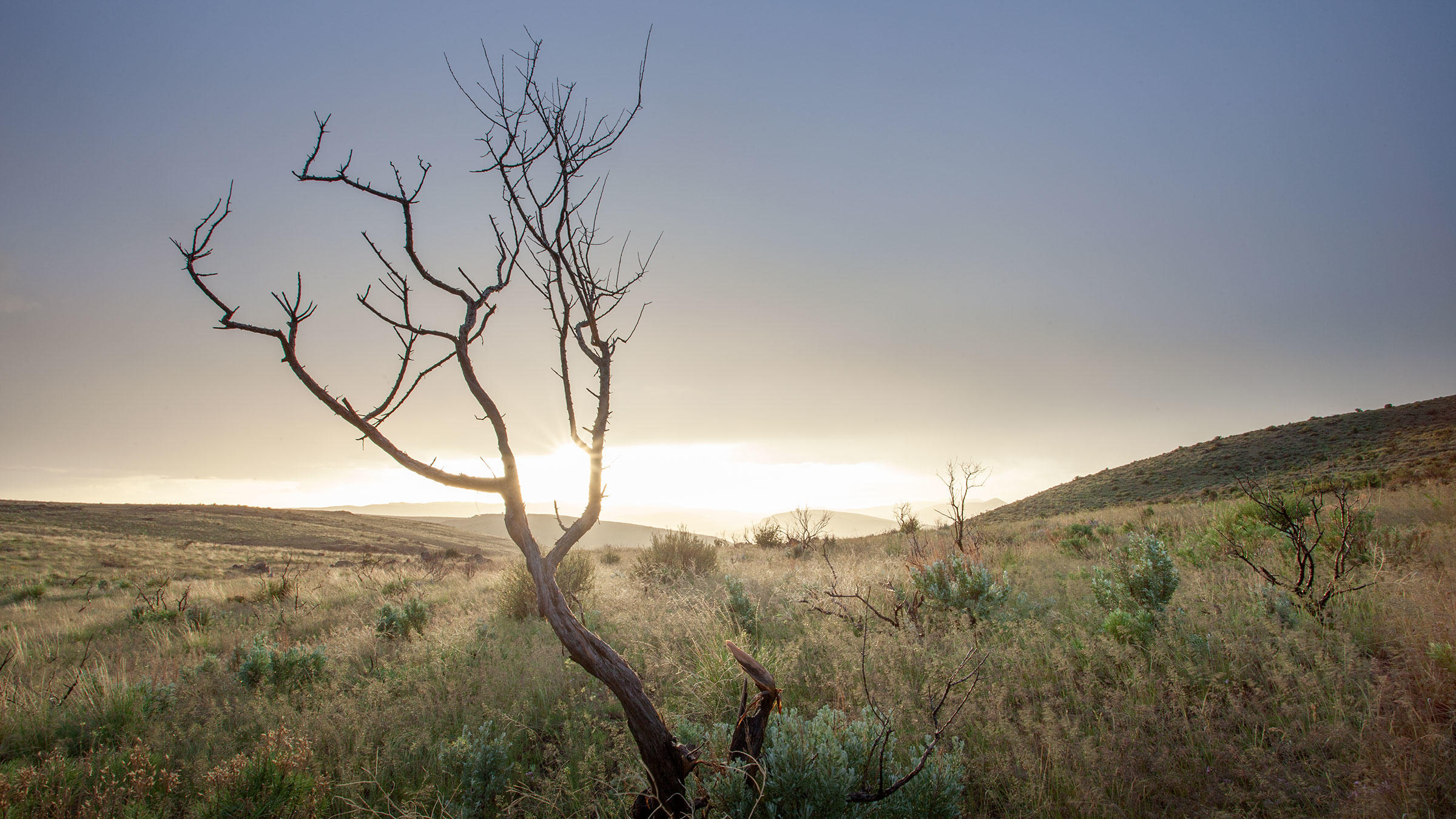 Sagebrush burned by a fire in Idaho.