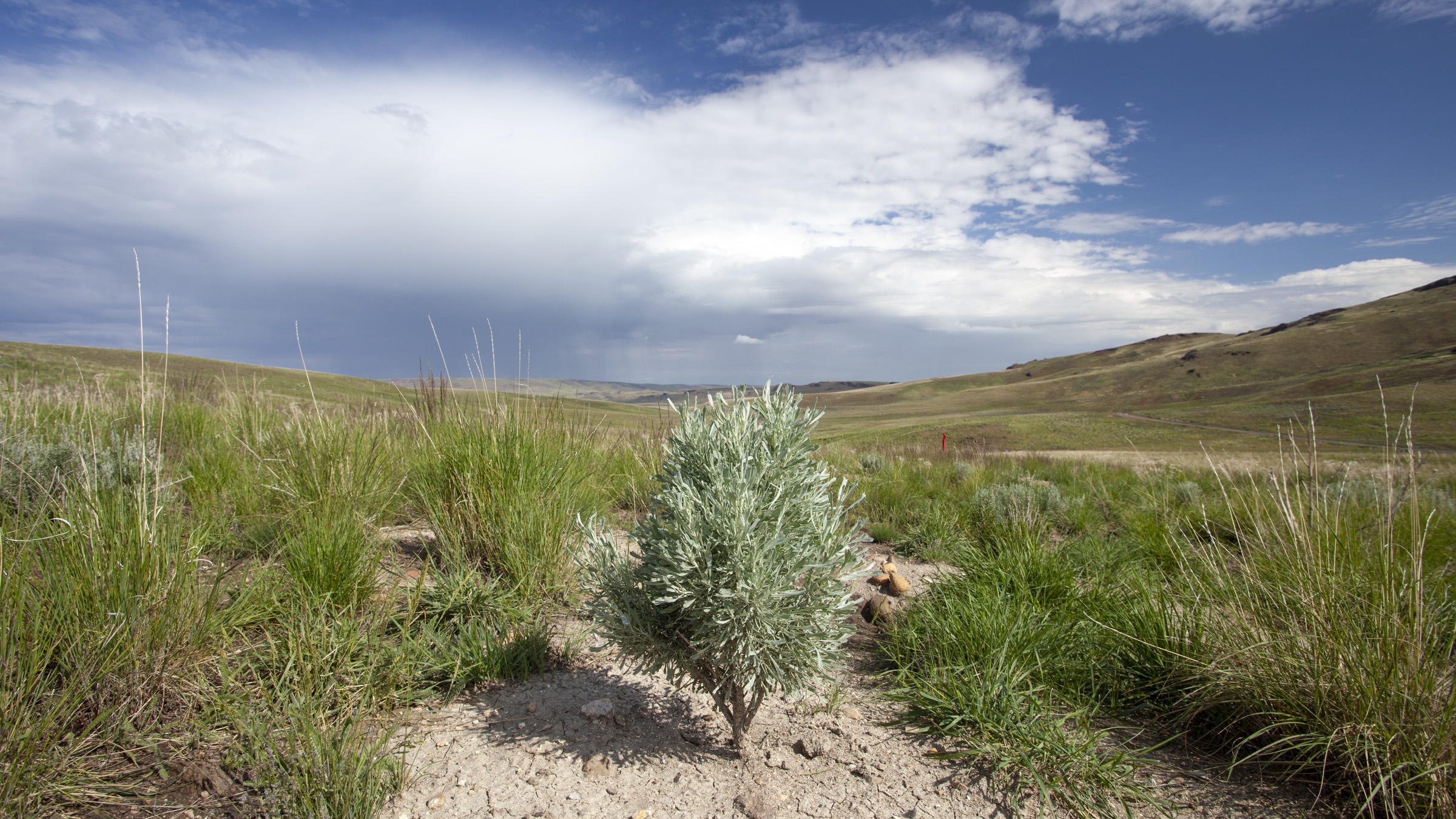 Audubon Rockies Soda Fire Sagebrush Rehabilitation