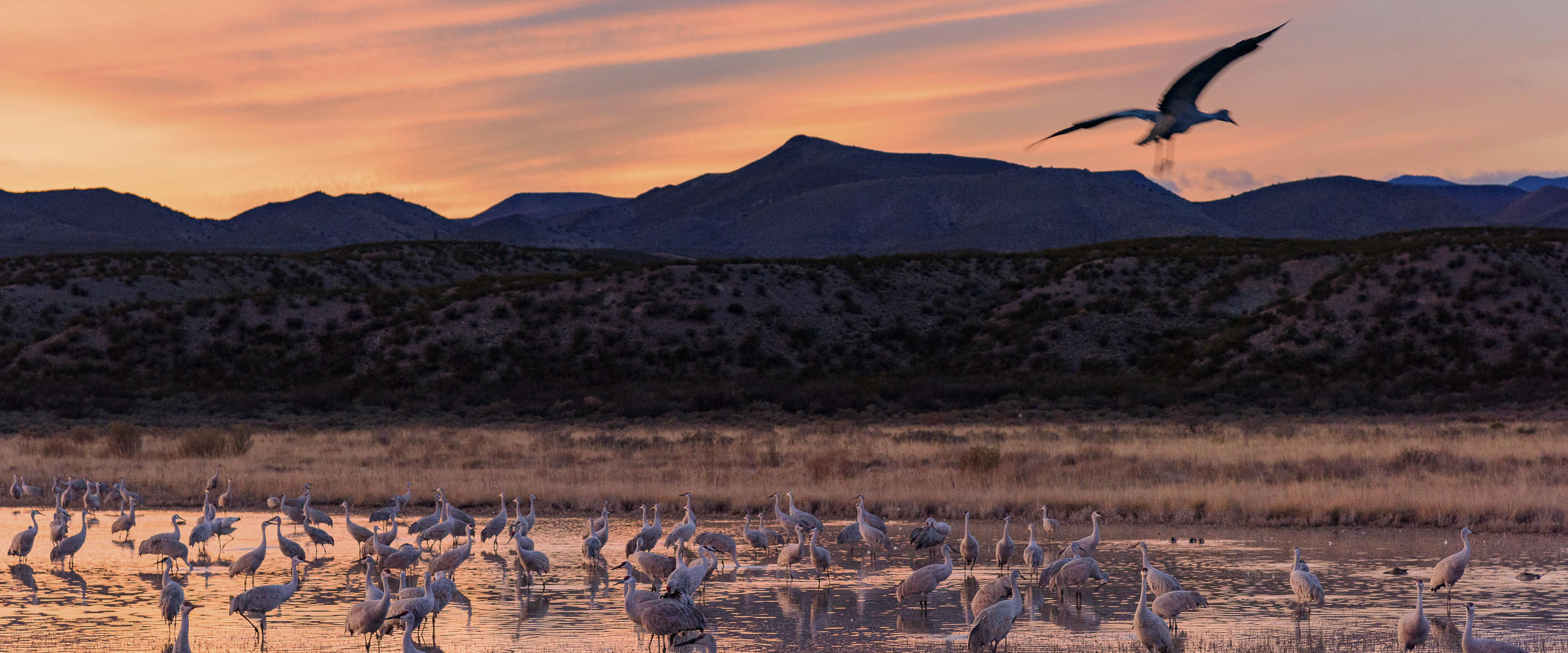 Sandhill Cranes Western Rivers Initaitive Audubon Rockies