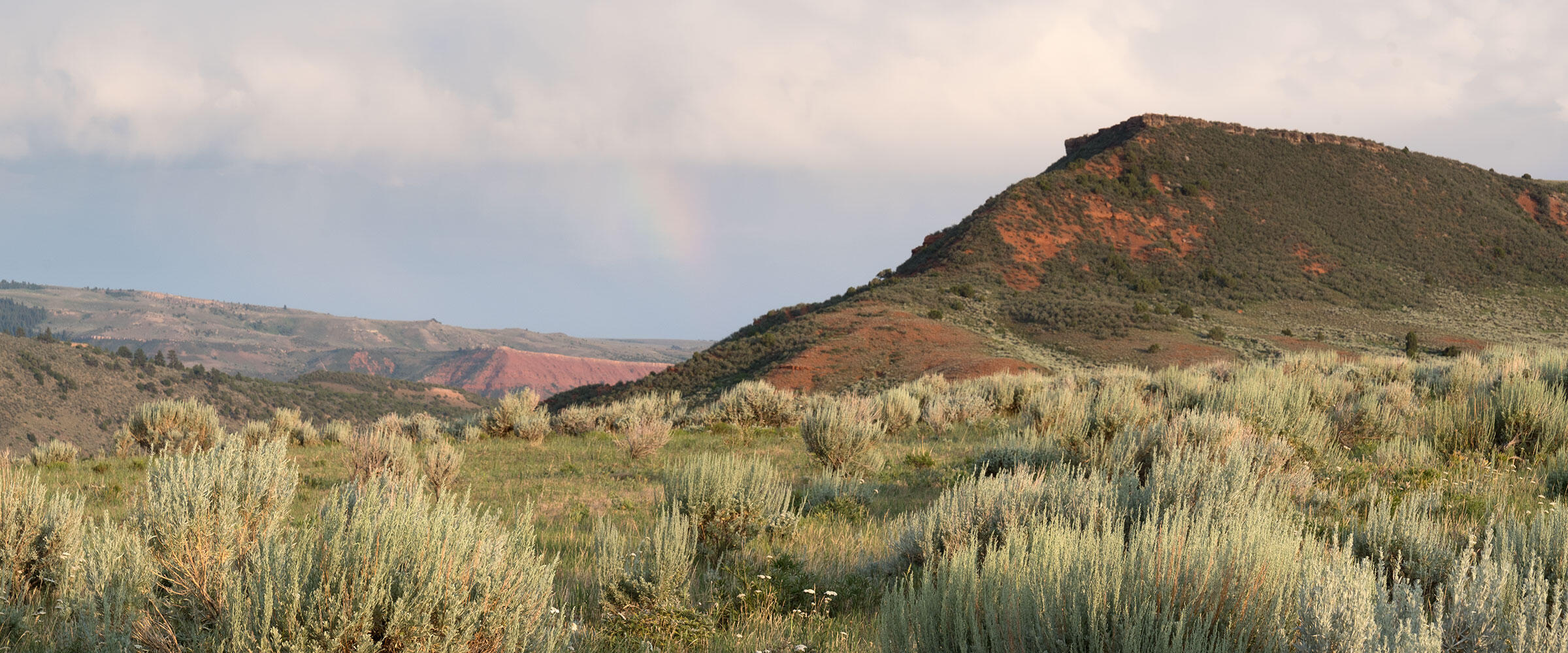 A red hill rises above sagebrush growing in a meadow.