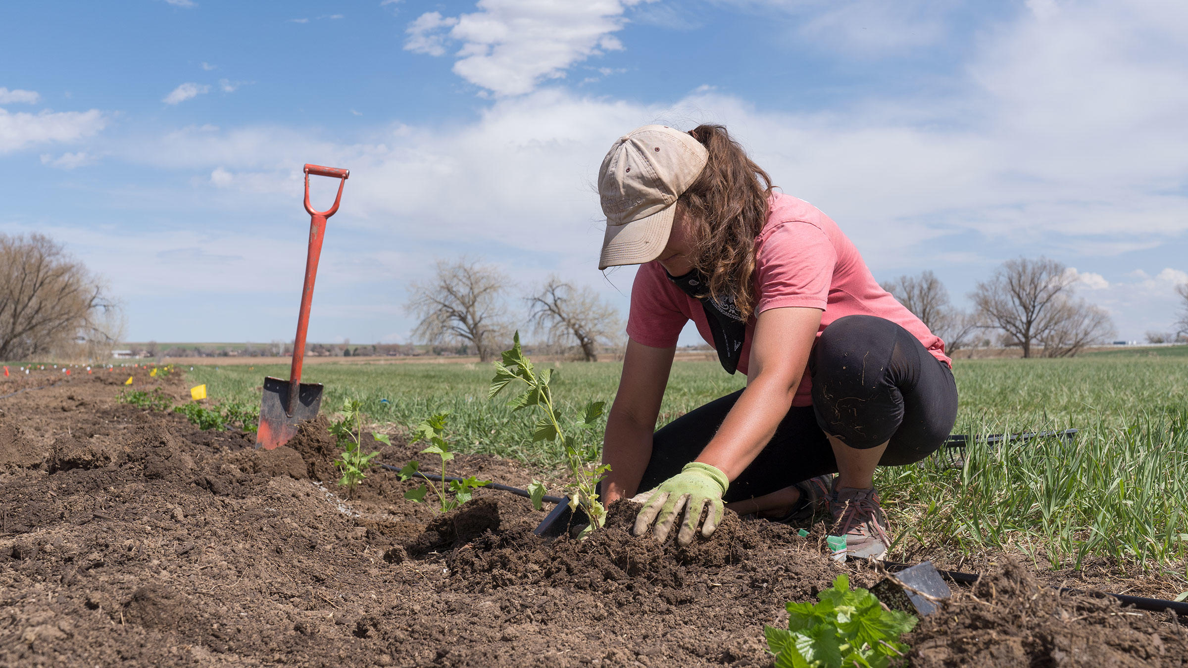 A contractor plants the Habitat Hero garden at Jack's Solar Garden.