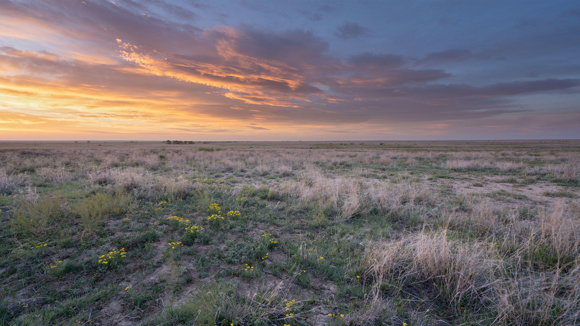 Sunrise on May Ranch in southeast Colorado.
