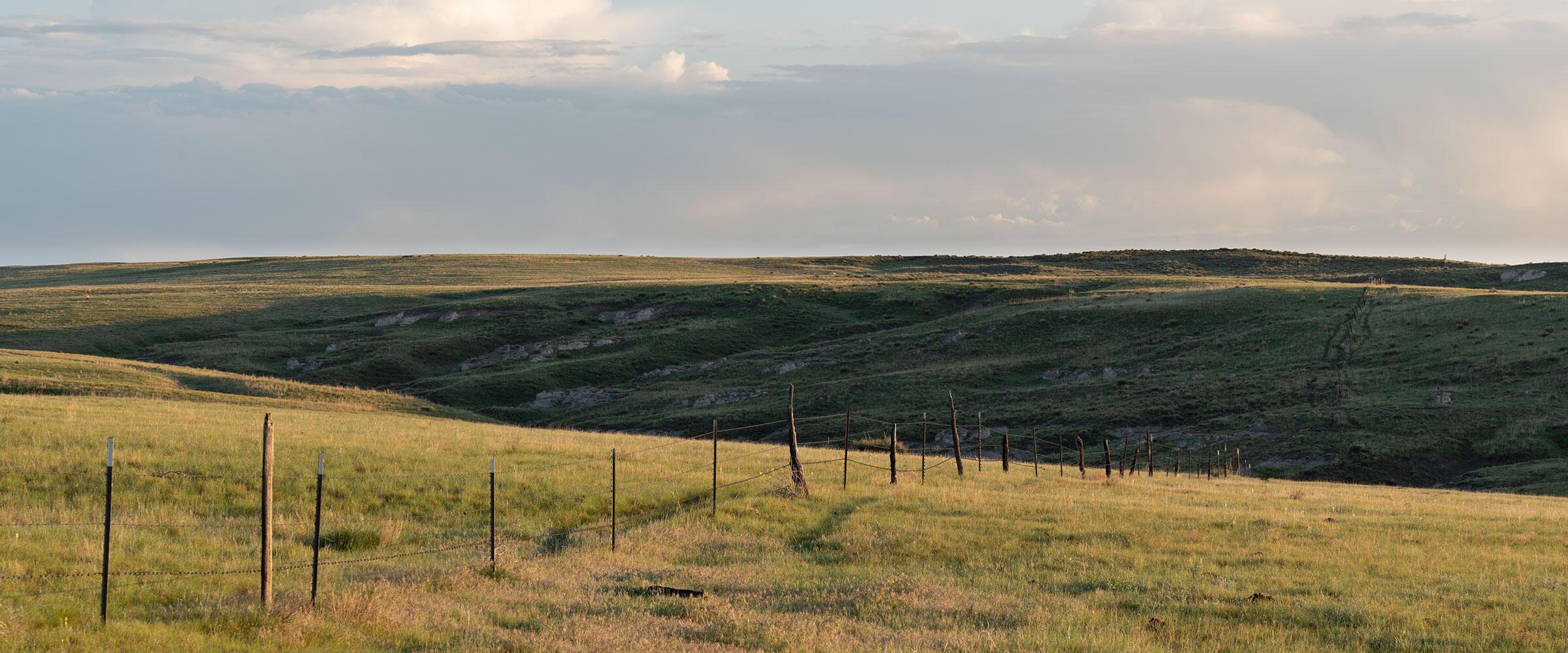 A fence runs through shortgrass prairie.