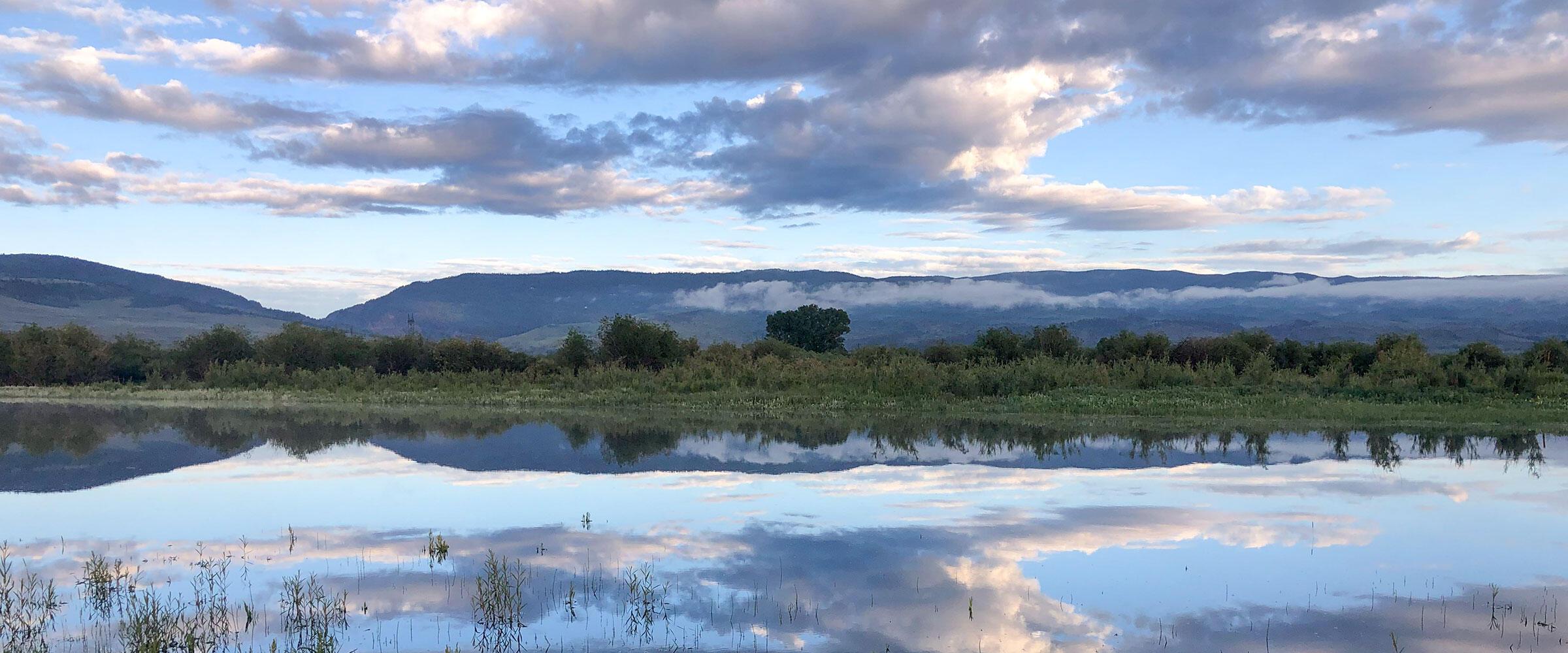 Sunrise over a wetland.