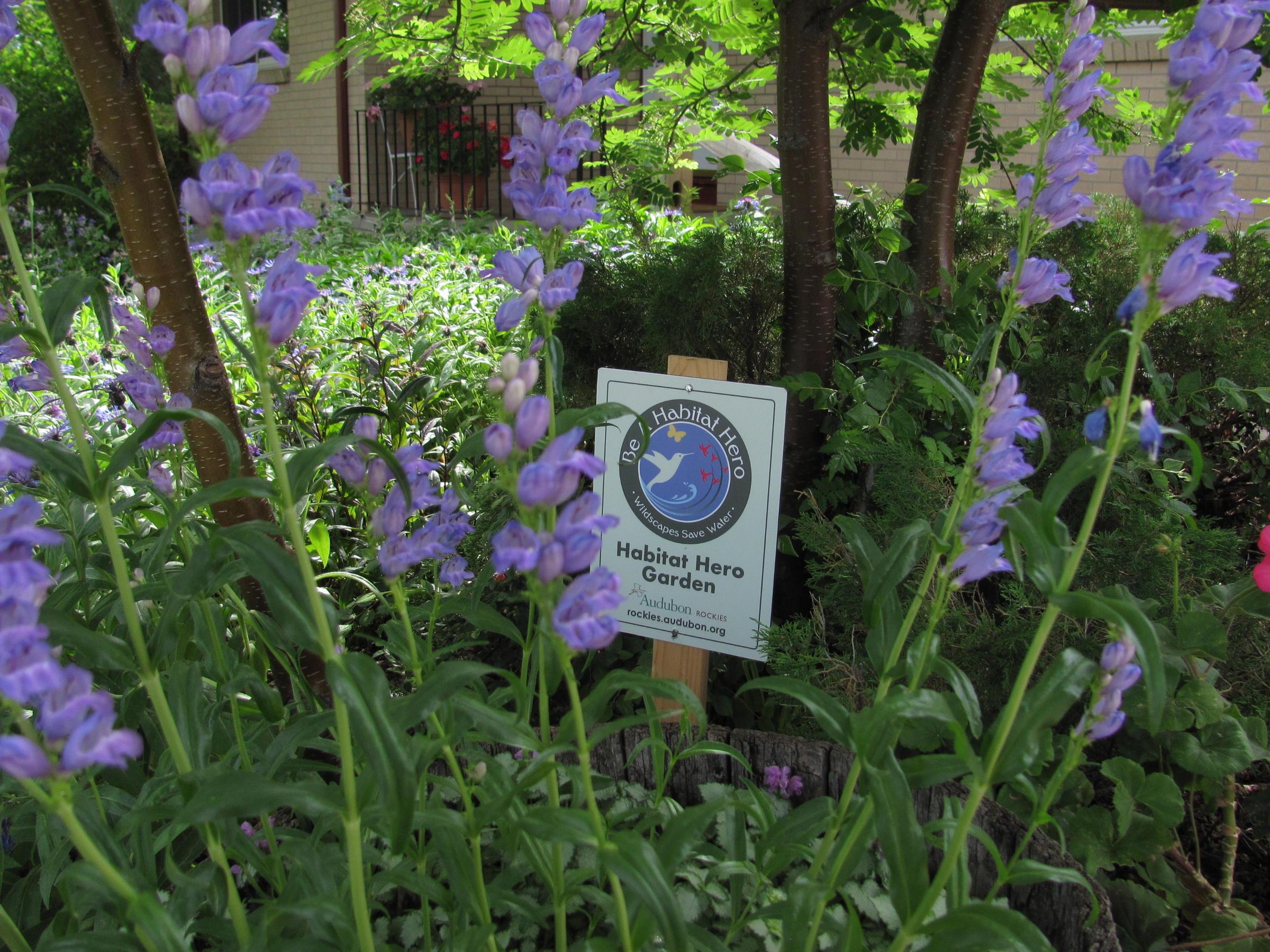 Habitat Hero garden in Cheyenne, WY.