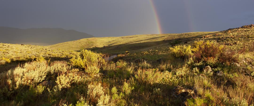Sagebrush ecosystem.