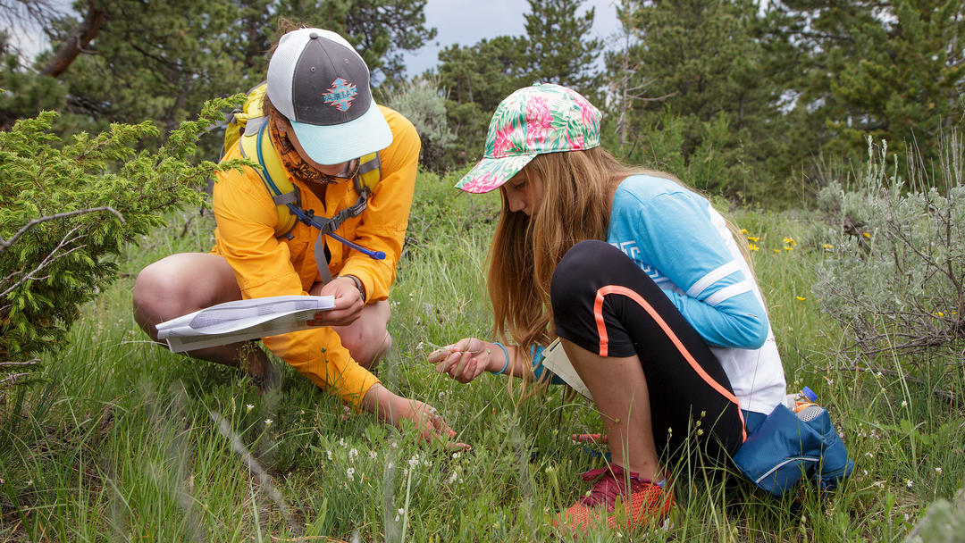 Identifying plants at Wyoming BioBlitz 2018.