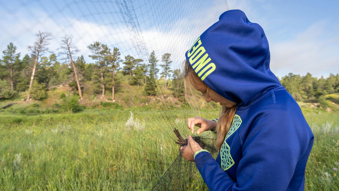 Katelyn removes a Brown-headed Cowbird from a mist net.