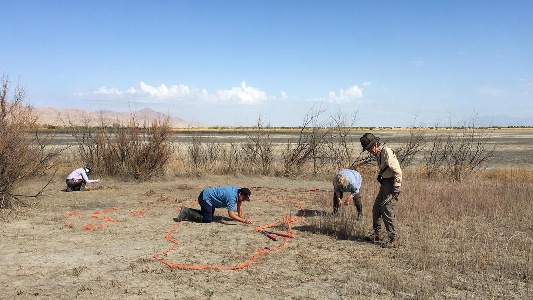 Audubon staff and volunteers removing tamarisk at Gillmor Sanctuary.
