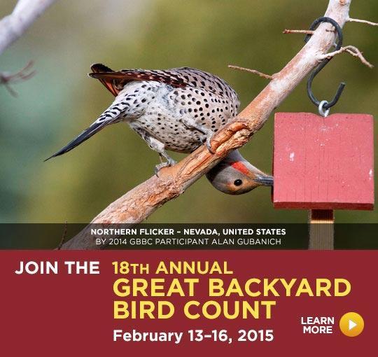 The Great Backyard Bird Count | Audubon Rockies